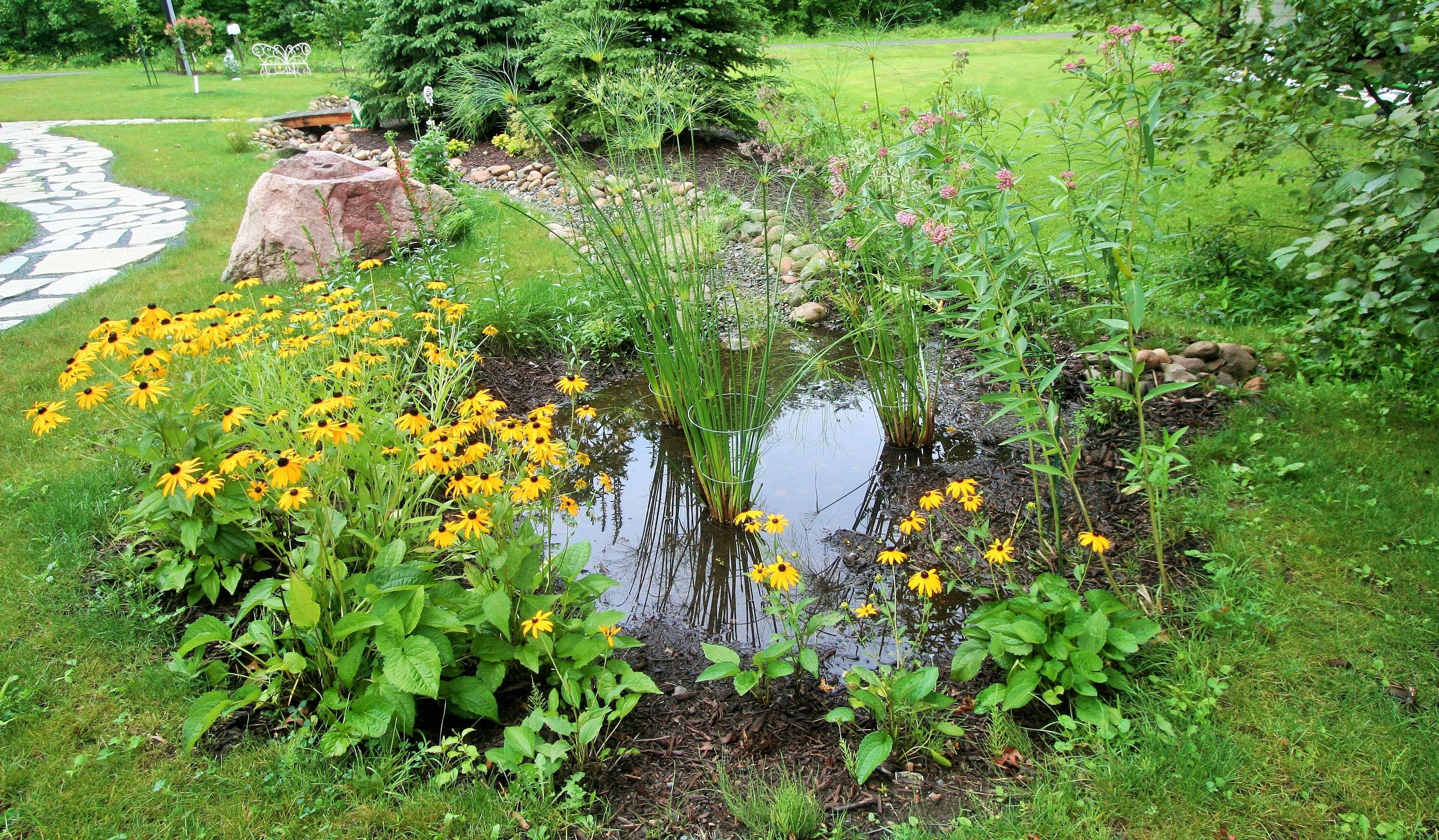 img_6746-3-rain-garden