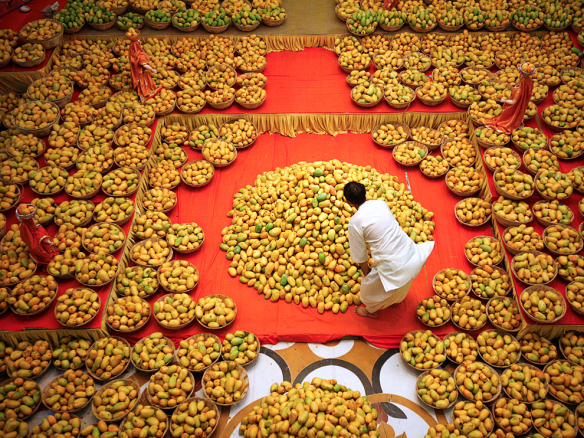 A Hindu priest arranges mangoes to be offered to Hindu God Lord Krishna inside a temple during a mango festival in the western Indian city of Ahmedabad June 9, 2012. REUTERS/Amit Dave (INDIA - Tags: RELIGION SOCIETY AGRICULTURE FOOD TPX IMAGES OF THE DAY) - RTX10HD4