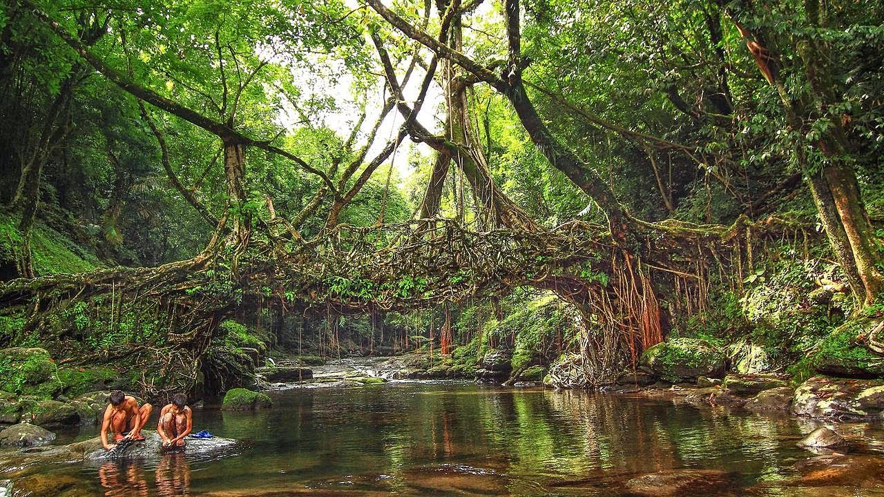 root bridge