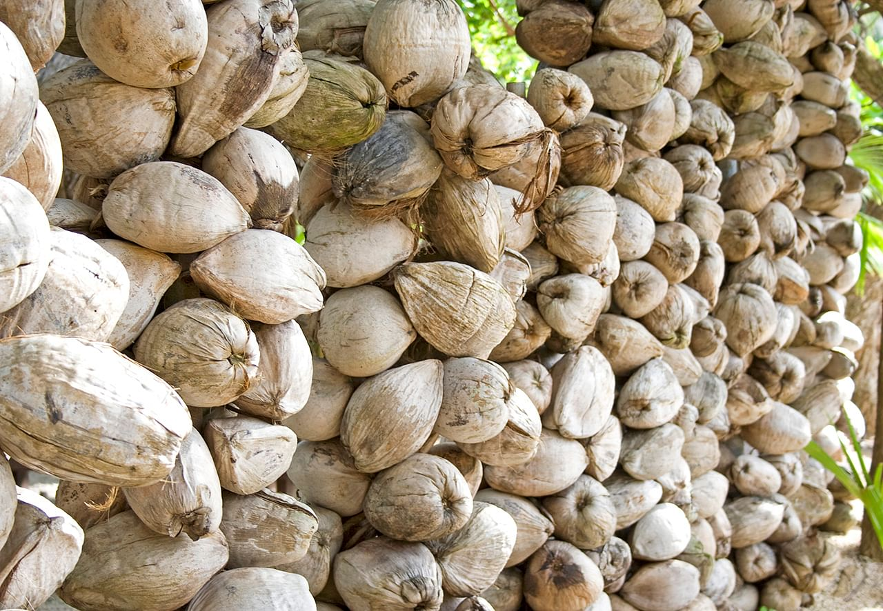Coconut_wall