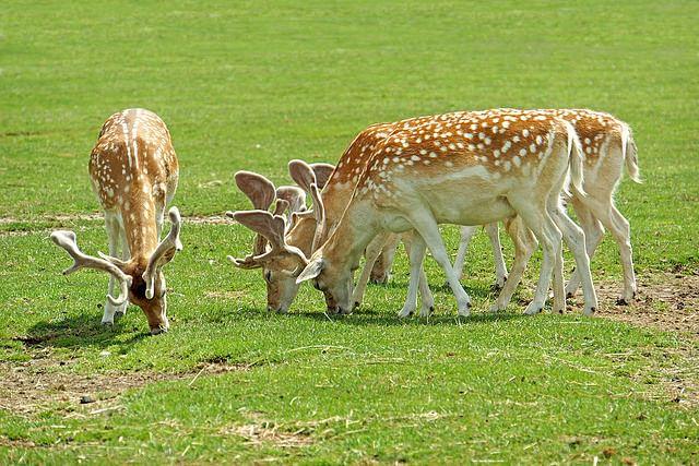 Deer-Rehabilitation-Centre-Thenmala
