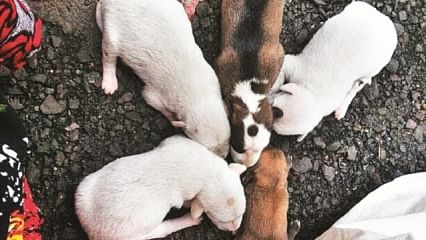 7 pups rescued from dustbin near JJ hospital in Mumbai