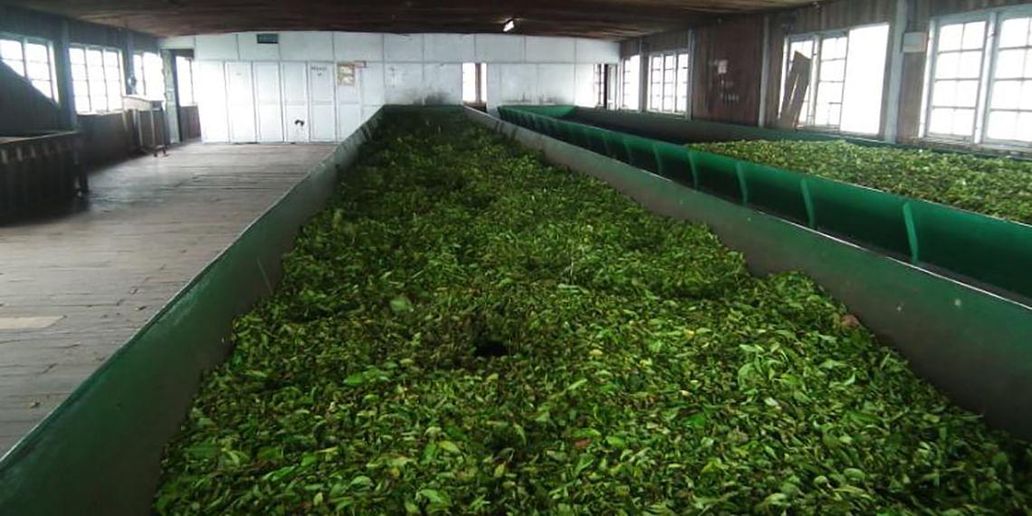 The-withering-room-fully-made-of-wood-Kolukkumalai-Tea-Factory