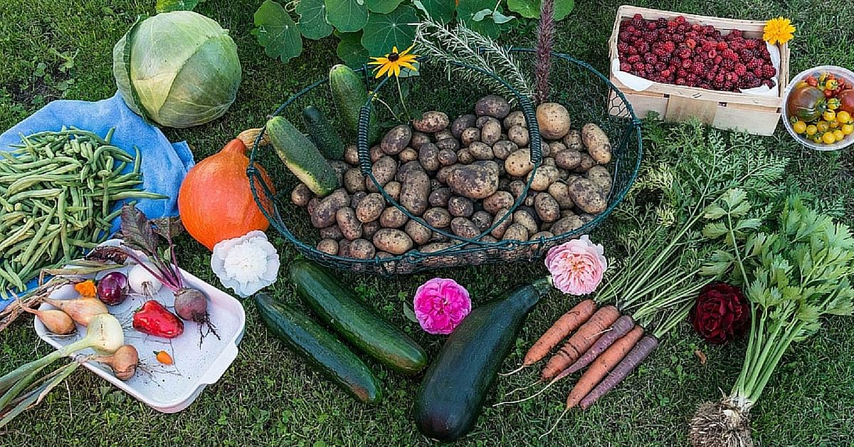 Government distributes diy terrace gardening kits in madurai solutioingenieria Images