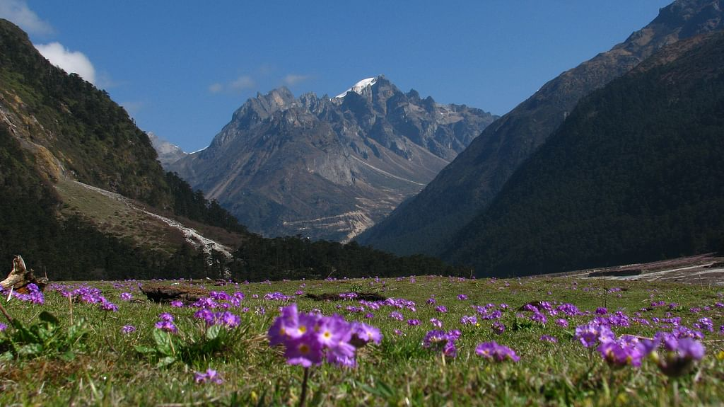 Yumthang-valley-with-Flowers - Copy