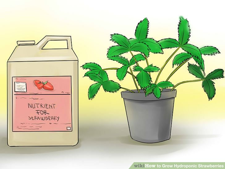 aid2219352-728px-Grow-Hydroponic-Strawberries-Step-1