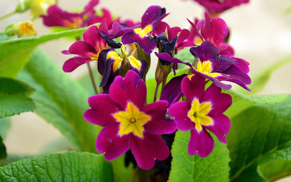 colourful-orchids-at-echhey-gaon1