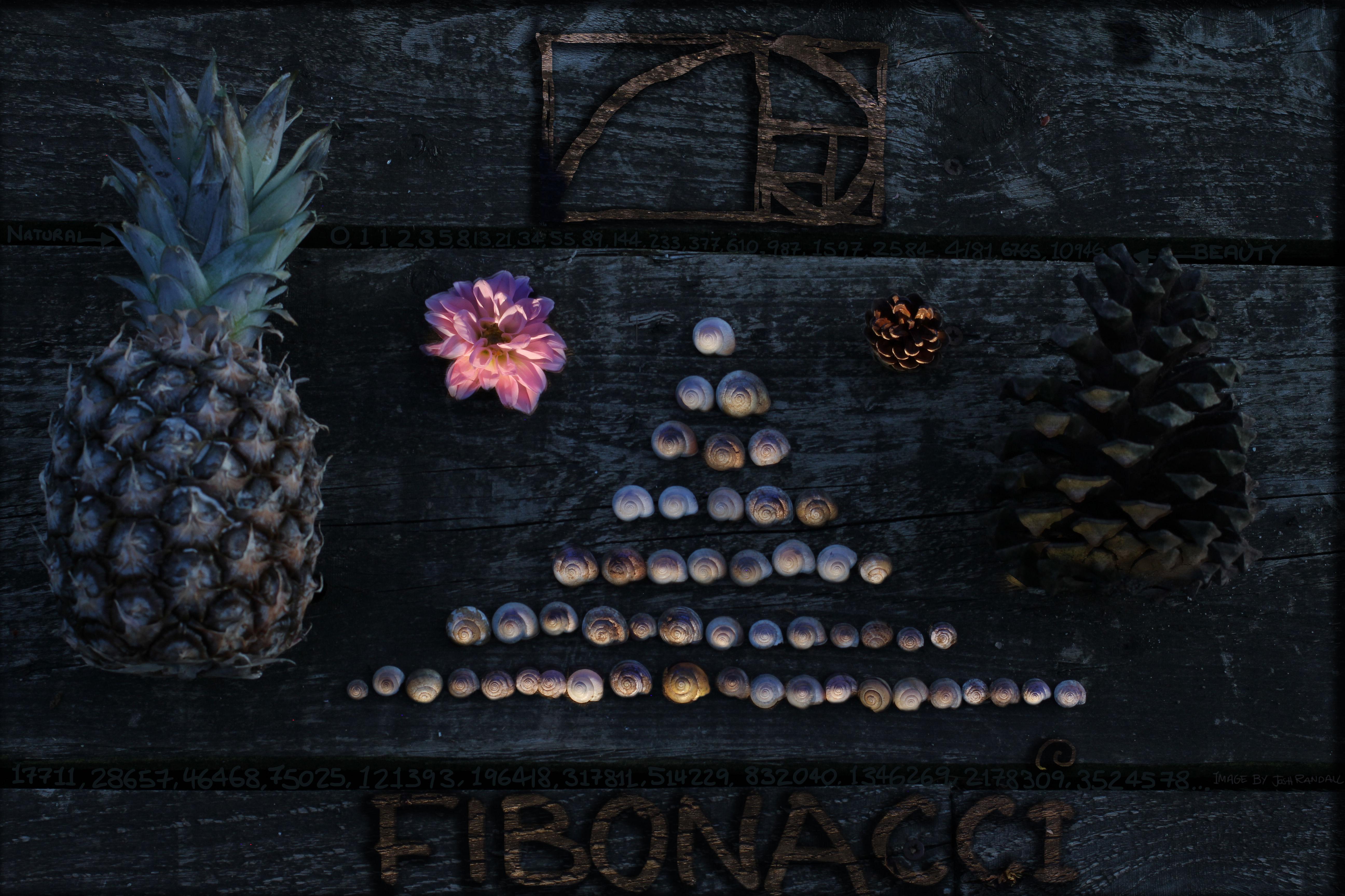 fibonacci-copy