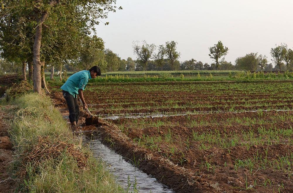 flood-irrigation-India-J-Hinsdale-photo