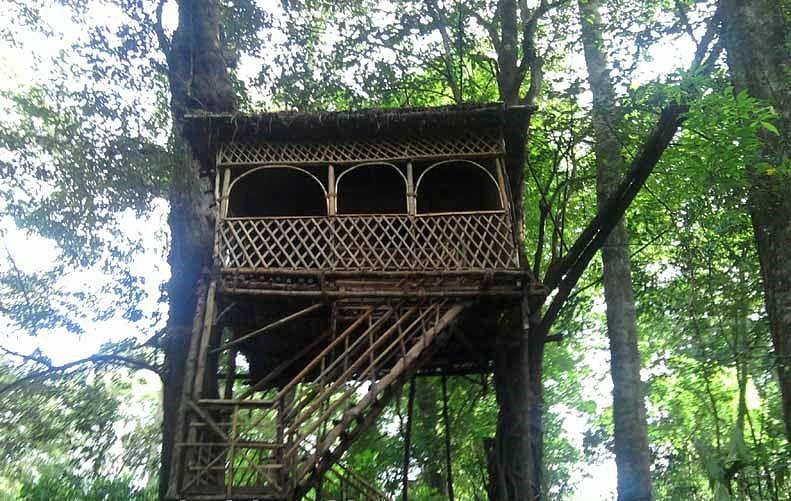 tree-house (1)