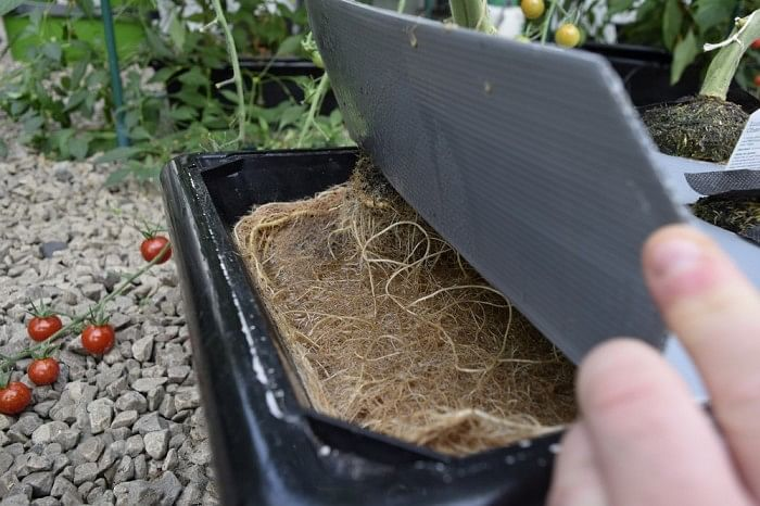 vivigrow_vegetable_planter_-_tomato_root_growth
