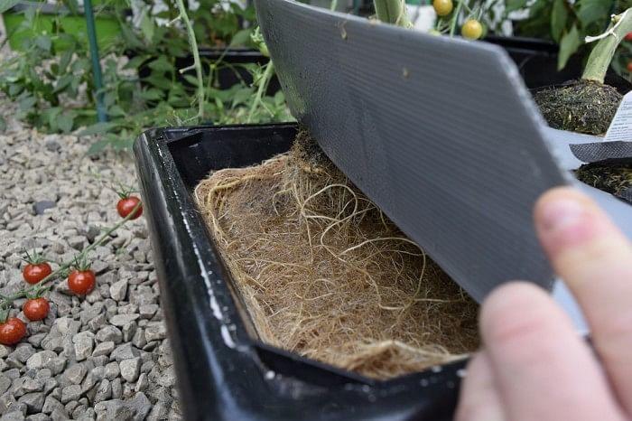 vivigrow_vegetable_planter_-_tomato_root_growth