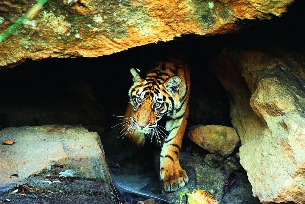 Bandhavgarh-National-Park-1024x685