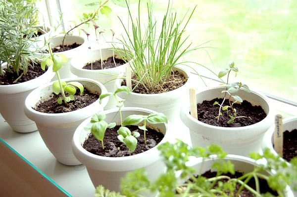 How to Grow a Space Saving Herb Garden at Home in India