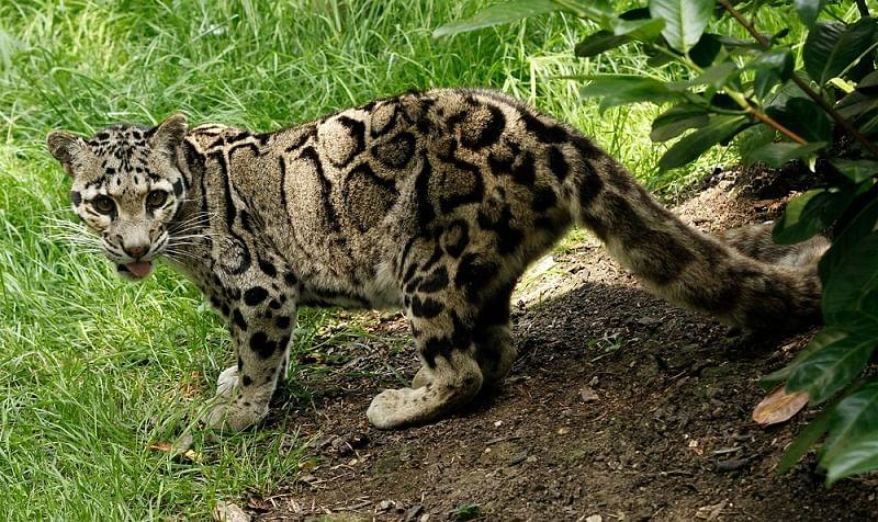 Manas-Wildlife-Sanctury