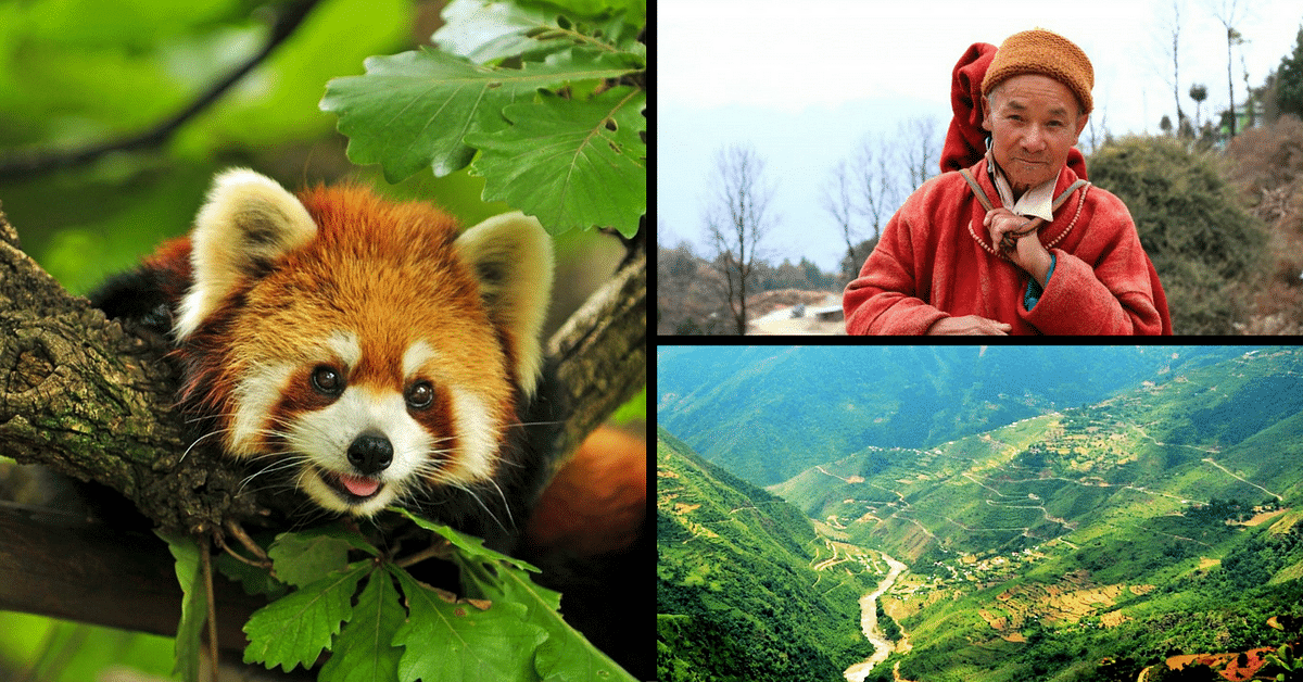 Locals in These Tiny Arunachal Villages Are Taking Huge Steps to Save the Endangered Red Panda