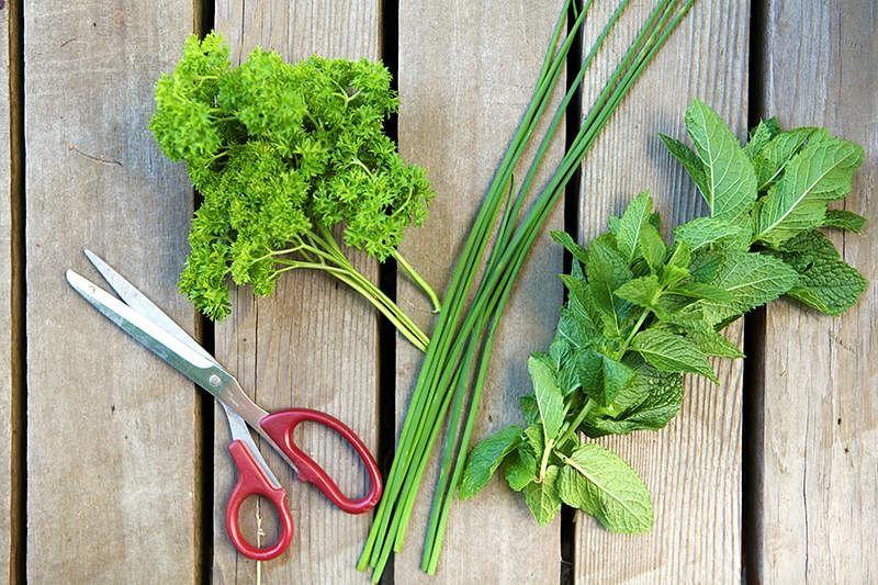 cut-herbs