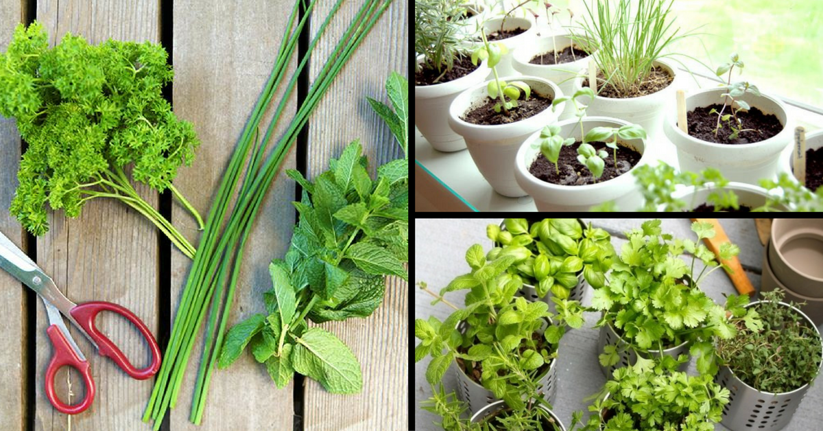Fresh Flavours for Your Food: How to Start Your Very Own Herb Garden at Home