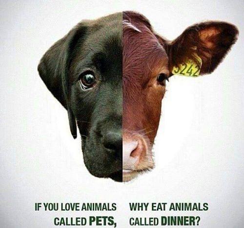 pets-vs-dinner