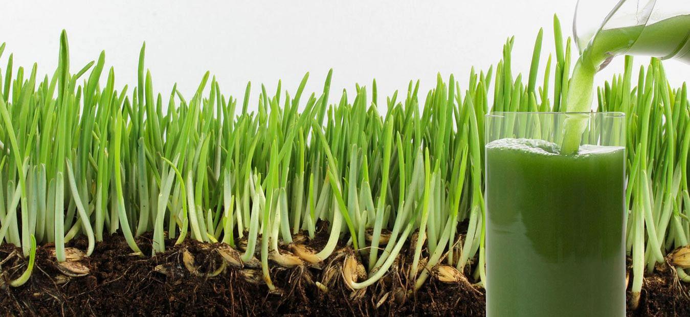 20103109-germinating-barley-jug-brendha_ml_edited-1