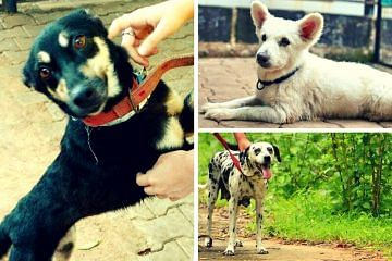 adoption_dogs