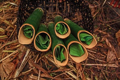 Apong, local rice wine made by the Adi Tribe in Arunachal Pradesh, served in hollow bamboo canes with a leaf stuffed to constrict the flow