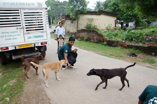 India Street Dog Program