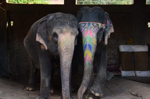 Mobile Elephant Treatment Service, Jaipur India, Tourism, Humane Society International, HSI
