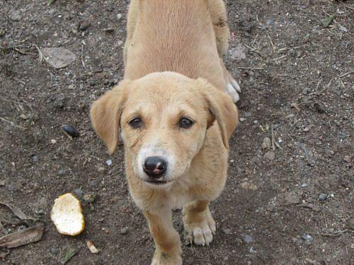 stray_dog_indian