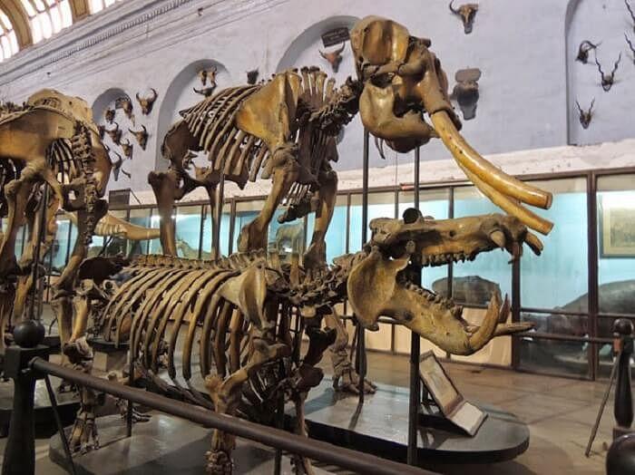 suketi-fossil-park