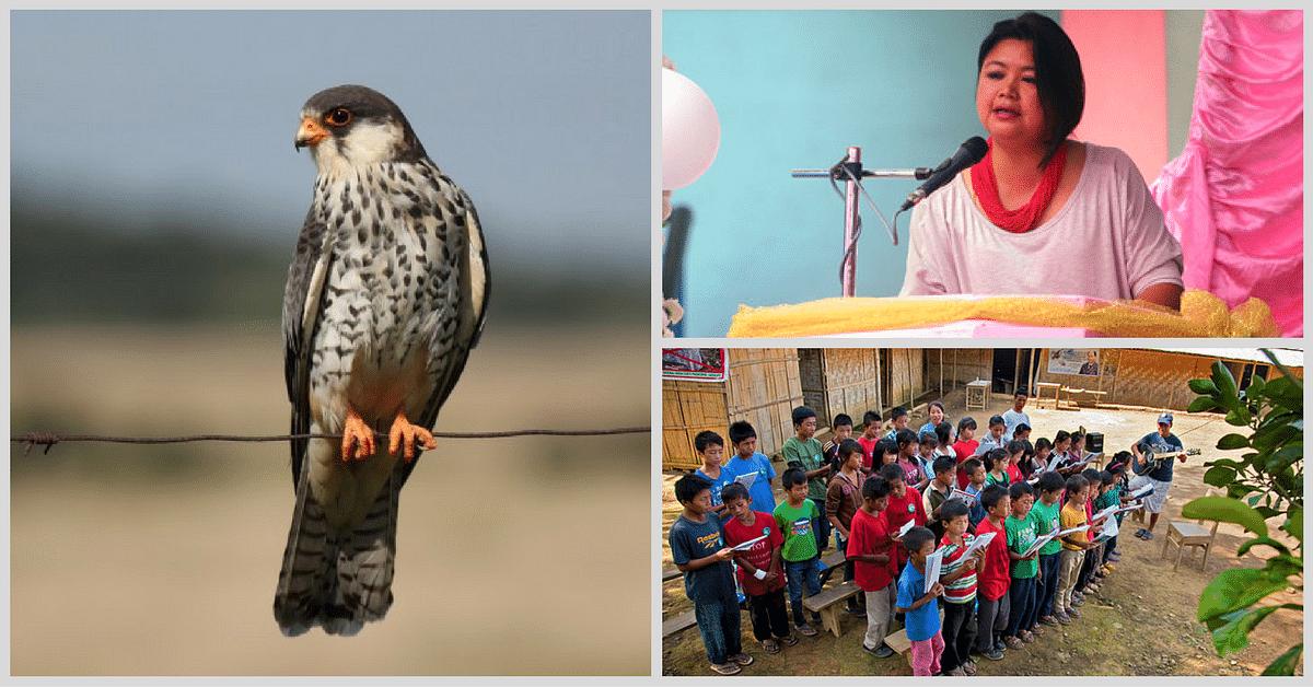 Flight of Freedom: Meet the Lady Who Saved Nagaland's Amur Falcons