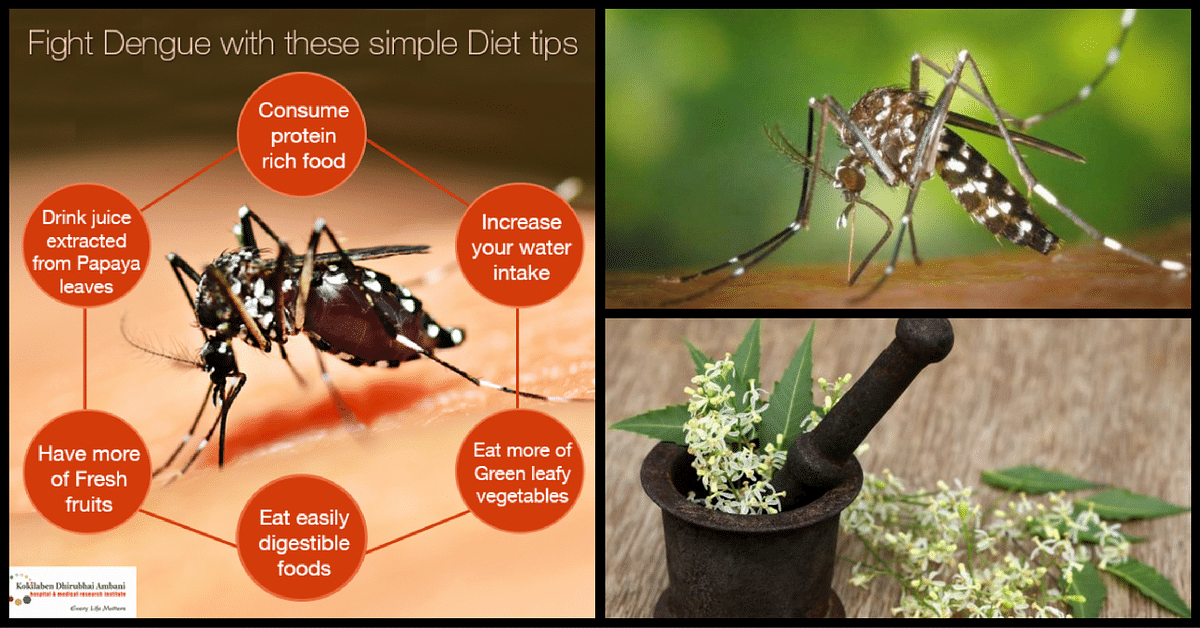 dengue and chikungunya everything you need to know to