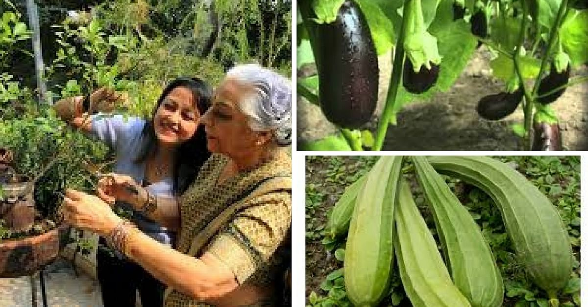 gurgaon vegetables