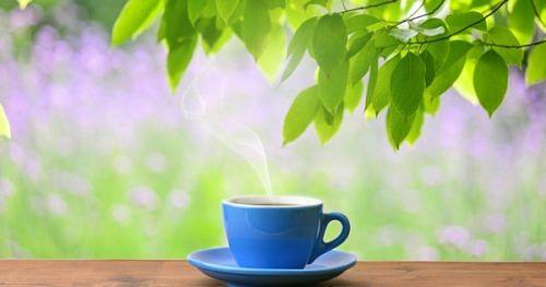 green tea boost metabolism