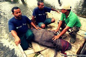 animal rescue_p