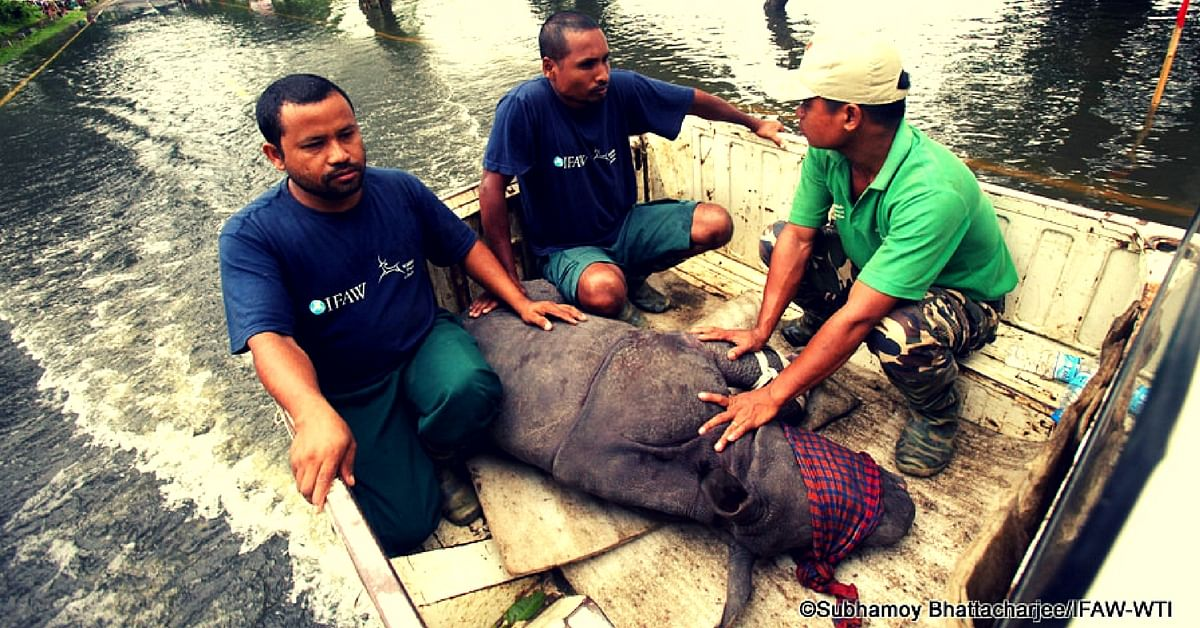 How One Organisation Worked Round the Clock to Rescue Flood Affected Animals in Kaziranga