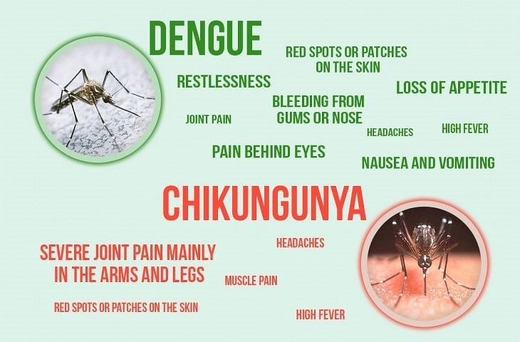 difference-zika-dengue-chickungunya