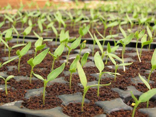 Seed germination in an urban garden