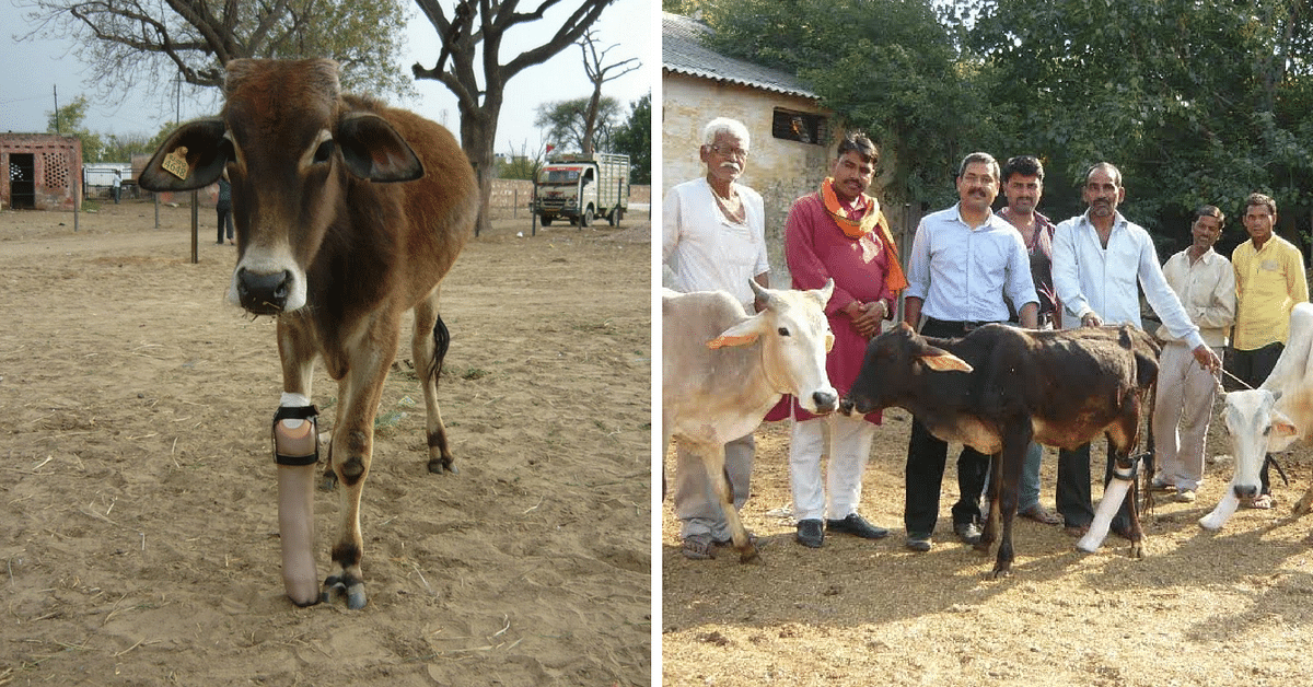 This Vet Is Putting Amputee Animals Back on Their Feet with Prosthetic Limbs. Free of Cost!