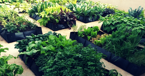 Everything You Ever Wanted To Know About Starting A Vegetable Garden In Your Own Home