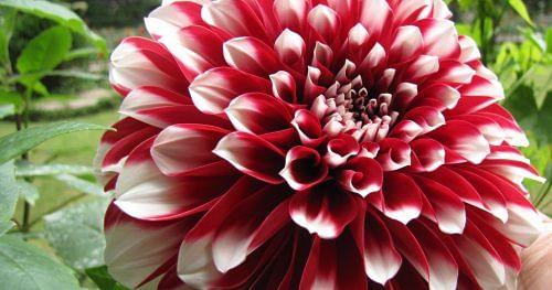 10 gardening mistakes beginners make