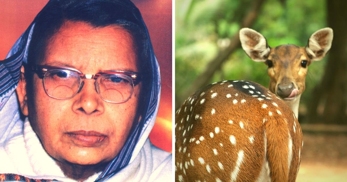 5 Beautiful Stories on Animals by Mahadevi Verma - An Animal Lover