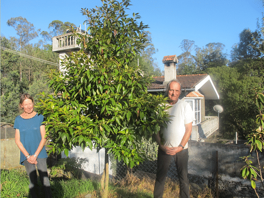 Robert Stewart and Tanya Balcar. Growing one of the rarest trees in the world - Elaeocarpus blascoi