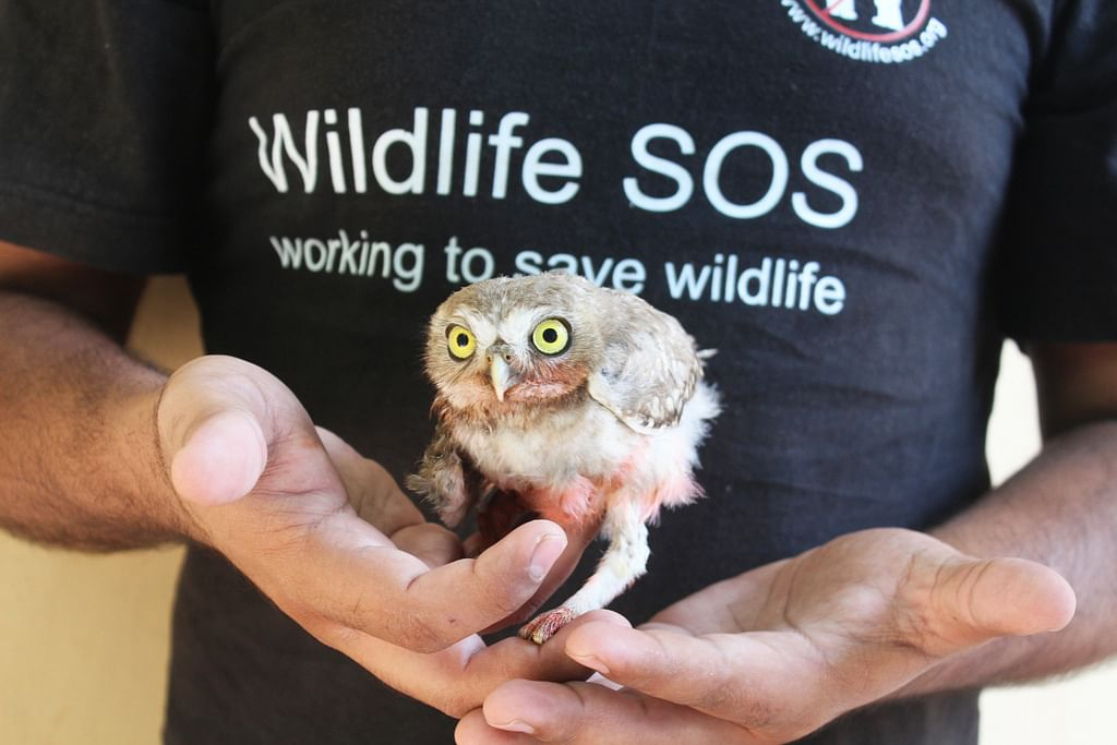 TBI Blogs: From Cages Back to the Wild – Helping India's Owls Escape Poaching and Illegal Trade