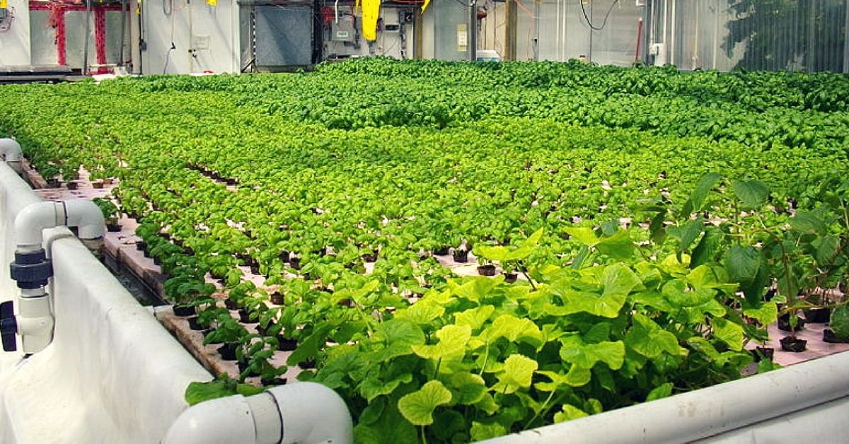 In a First for North India, Organic Farming Enthusiast Sets Up Aquaponic Farm in Gurugram