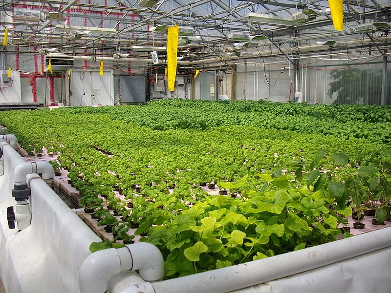 Organic farming enthusiast sets up first aquaponic farm in gurugram aquaponics is a system of aquaculture which allows farmers to raise fishes while also being able to grow plants the waste produced by the farmed fish or sciox Images