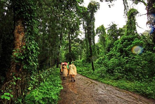 coorg_coffee_plantation_workers_zpsd7d109bb