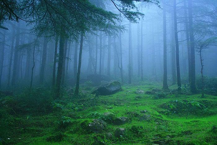 dense-forests-in-lambasingi1