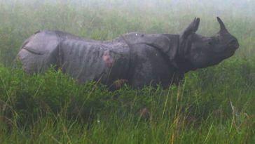 Elrhino rhino
