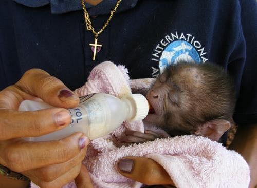 goa-cheif-minister-doc-primats-babies